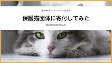 アイキャッチ 保護猫団体に寄付してみた