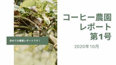 コーヒー農園オーナー制度、第1回農園レポートが届きました【2020-21年期】
