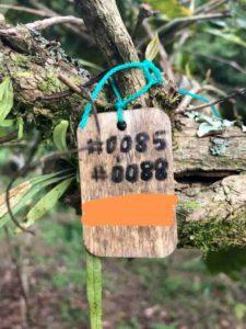 コーヒーの木の写真