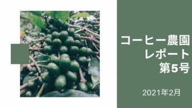アイキャッチ コーヒー農園レポート第5号