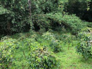 コーヒー農園の写真