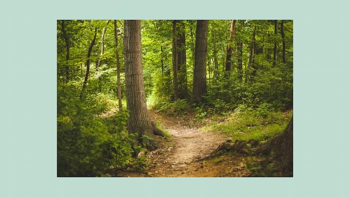 森林 写真